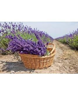 Lavendelzeep biologisch