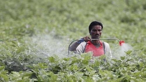 Bij het verbouwen van katoen worden enorm veel pesticiden gebruikt